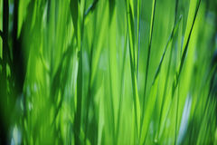 Grass abstract Stock Photos