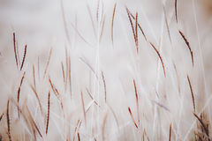 Grass. Abstract grass for wallpaper Royalty Free Stock Images