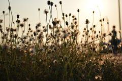 Grass affect  solar is golden Royalty Free Stock Photos