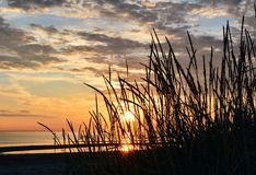 Grass against the background of sunset sky Royalty Free Stock Photography