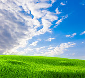 Grass against the blue sky Royalty Free Stock Photo