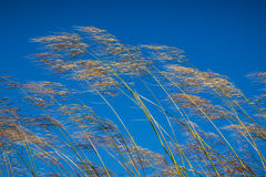 Grass against blue sky background Royalty Free Stock Photos