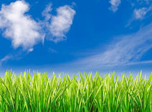 Grass against cloudy blue sky Stock Image