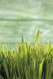 Grass against green background Stock Image