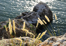 Grass against mountains royalty free stock photos