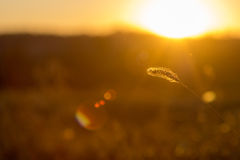 Grass against the setting sun Royalty Free Stock Photos