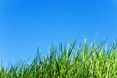 Grass against sky. Grass from below against a serene blue sky royalty free stock images