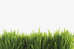 Grass against white background Stock Photos