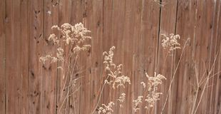 Grass along fence Stock Photography