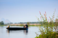 Grass along the river bank against a backdrop of fishermen . Royalty Free Stock Photo