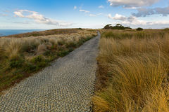 Grass along smooth path on top of The Nut State Reserve Plateau. Tableland in Stanley during Autumn in Tasmania, Australia. The nut is old volcanic plug of Stock Images