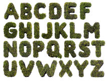 Grass alphabet. Latin alphabet letters made from grass on white Stock Image