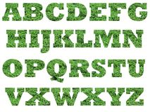 Grass alphabet capital letters. Alphabets that have  grass as a background detail. These fonts are rockwell bold, 700 pixel sized. The background is white to Stock Image