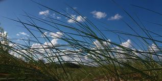 Grass. Amazing nature blue sky and grass Stock Photography