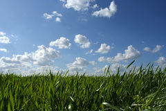 Grass And Cloudy Sky Royalty Free Stock Photos