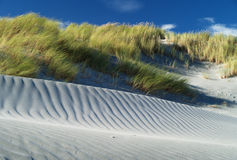 Grass And Sand Dunes Royalty Free Stock Image