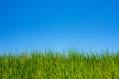 Free Grass And Sky Royalty Free Stock Photos - 10047648