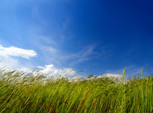 Grass And Wind Blowing Stock Photos