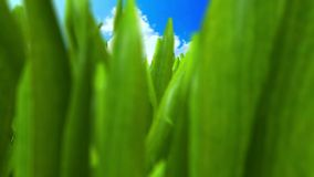 Grass Animation stock video