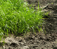 Grass on arable land. Close-up of grass at the edge of ploughed field Stock Photography