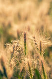 Grass in arid region. Royalty Free Stock Images