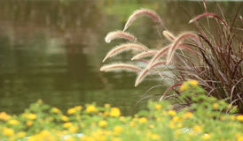 Grass around the lake Royalty Free Stock Images