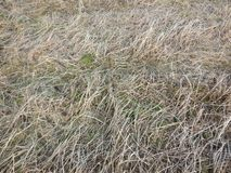 The grass. Artistic look in vintage vivid colours. Royalty Free Stock Photos