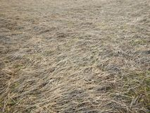 The grass. Artistic look in vintage vivid colours. Royalty Free Stock Photo