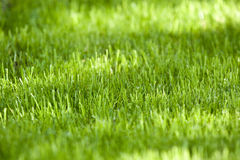 Grass as a background Royalty Free Stock Photography