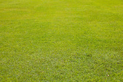 Grass as texture for background Stock Photos