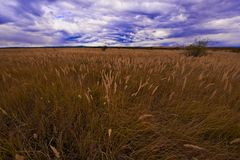 Grass in the autumn Royalty Free Stock Photography