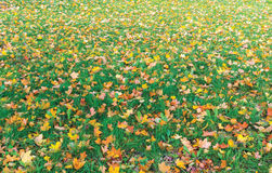 Grass in Autumn Stock Image