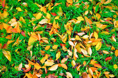 Grass and autumn leaves Royalty Free Stock Image