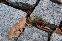 Grass and autumn leaves through paving stone Royalty Free Stock Photos