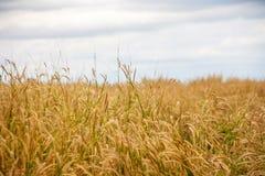 Grass in autumn season Royalty Free Stock Photos