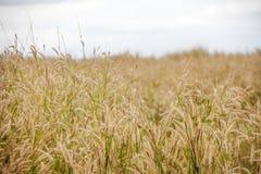 Grass in autumn season Stock Photo