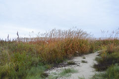 Grass in the autumn wind . Royalty Free Stock Photography
