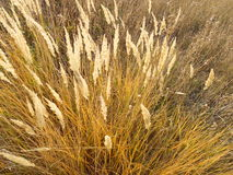 Grass in autumn. The grass is yellow on a Sunny autumn day Stock Photos