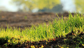 Grass bacground Royalty Free Stock Photo