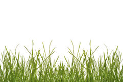 Grass Backgorund Studio-Isolated Stock Images