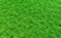 Grass backgound #3. 3D render - perfectly clean grass background Royalty Free Stock Image