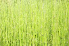 Grass background. In close up stock photography