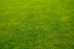 Grass background. Background of green grass on a sunny day Royalty Free Stock Photo