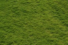 Grass background. Image depicting a grass background Stock Photography