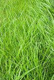 Grass background Stock Image