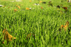 Grass background. With the leaves Stock Images