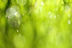 Grass background. Abstract grass background with reflection of sun stock photos