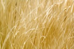 Grass - Background. Close up shot of grass, good for backgrounds Royalty Free Stock Photography