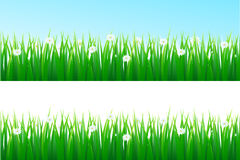 Grass background Royalty Free Stock Photography