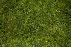 Grass background. Square of green grass abstract background Royalty Free Stock Image